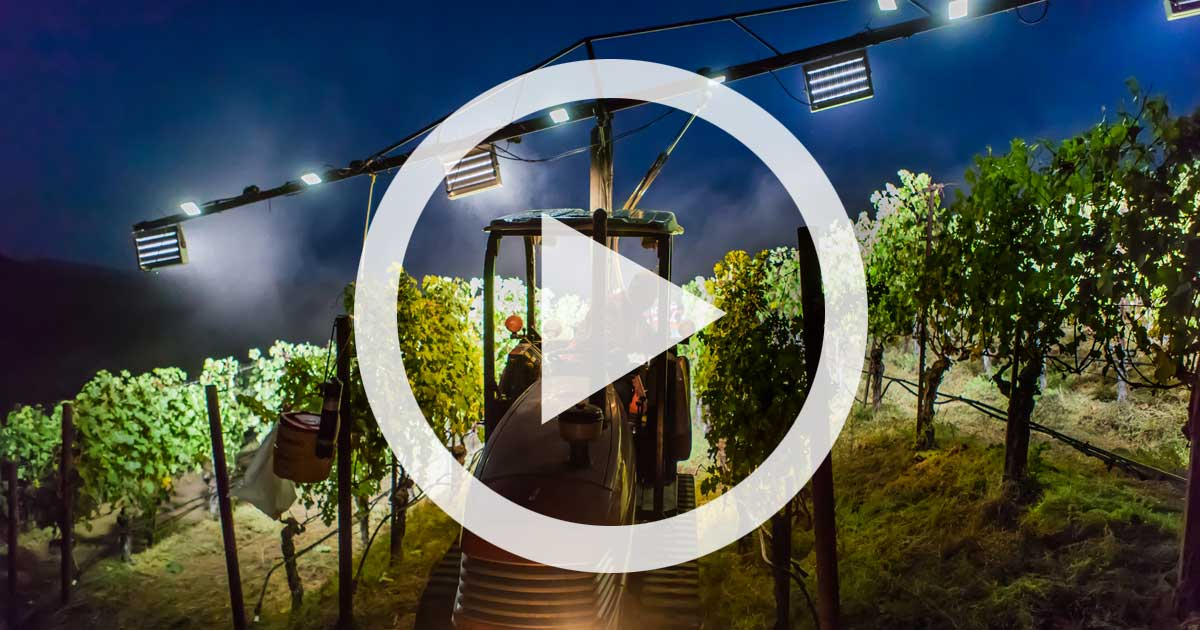 Video: Harvest is All About Beauty and Speed